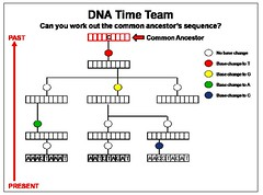 Comparing Natural Selection Genetic Drift And Gene Flow Mastering Biology
