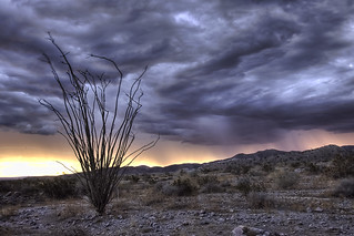 Ocotillo storm morn | by cloudchaser32000