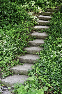 Old stone steps through thick green vegetation | by Horia Varlan