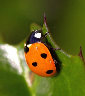 Just One More Ladybird! | by Chrissie28IWish! ~ hubby passed away 5th Dec peace