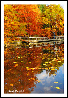 Fall Color of Cypress Pond - Van Dusen Botancial Garden Vancouver N5134e | by Harris Hui (in search of light)