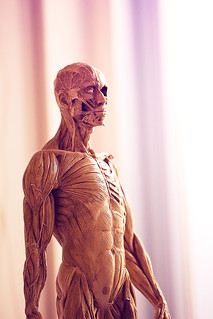 Anatomical Figure | by Matthew Dartford