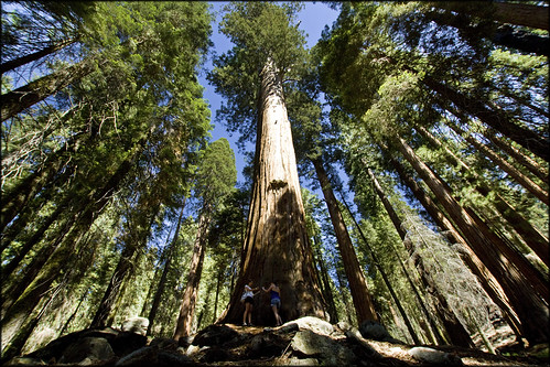 USA - Sequoia National Park - Towering trees | by Mathieu Soete