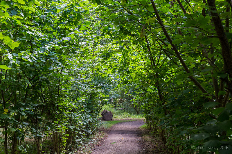 in the Woodland Walk (3)
