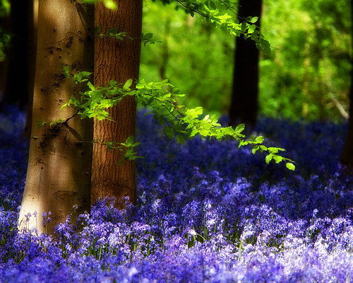 Mystic Woodland | by Andrew Haynes Wildlife Images