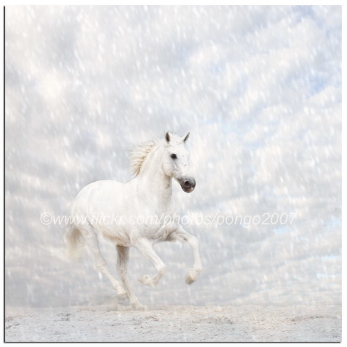 Snow Horse | by pongo 2007