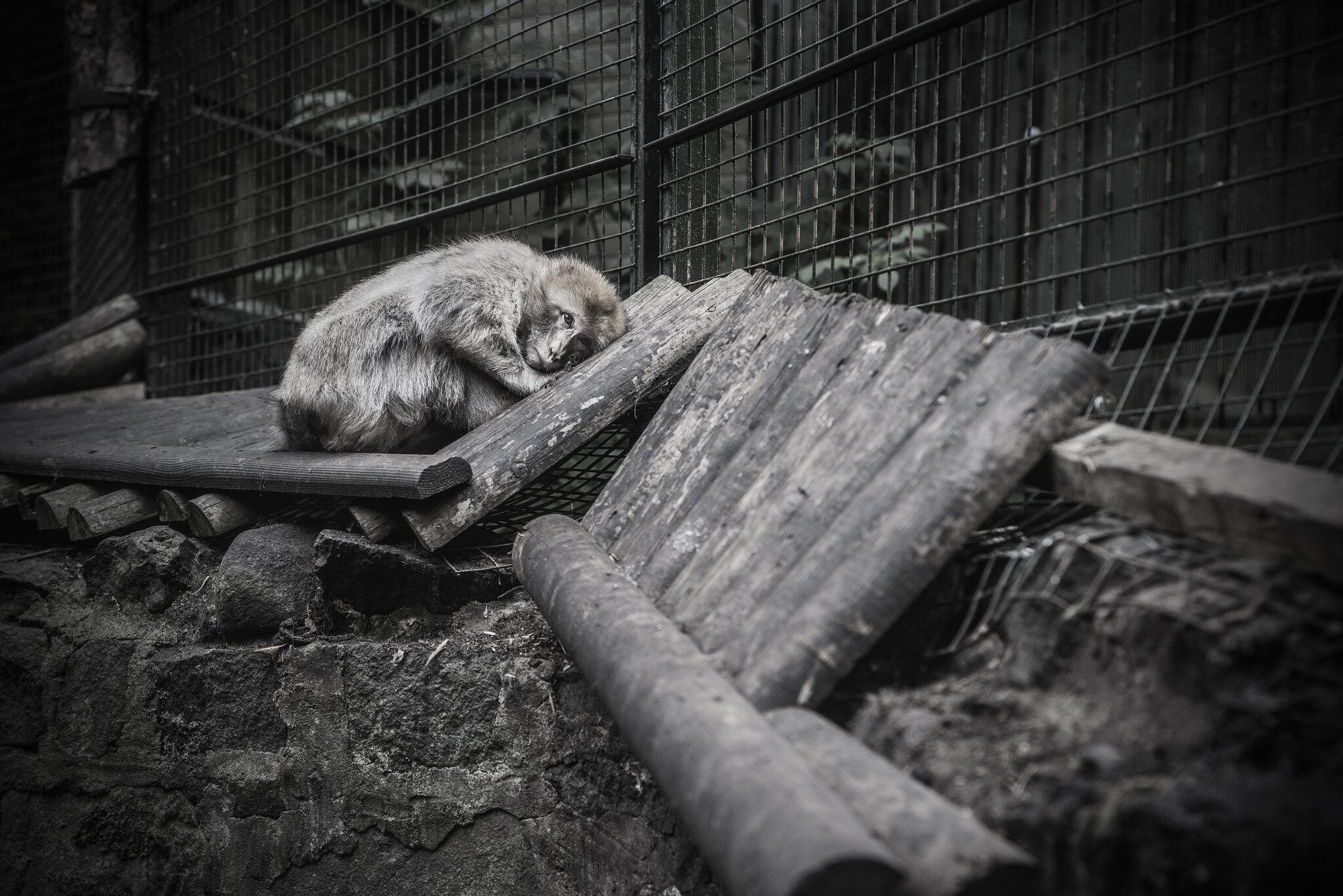 Animals in European Zoos: A Photo Exhibition (c) Britta Jaschinski
