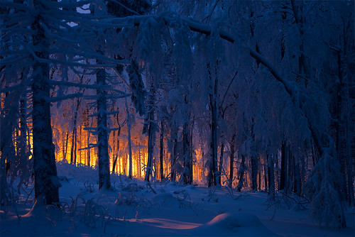 burning forest | by stephan_amm