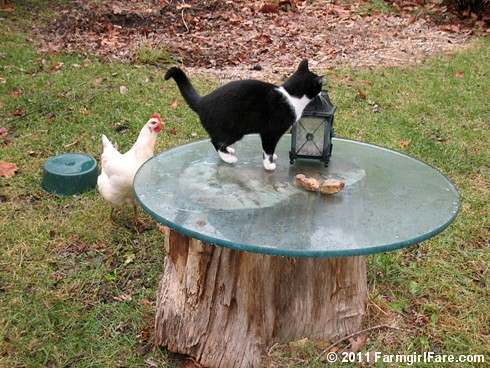 Looking for Kit Kat's Food Dish 3 | by Farmgirl Susan