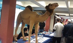 Perl Camel