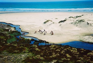 wild horses on beach | by saltairnz