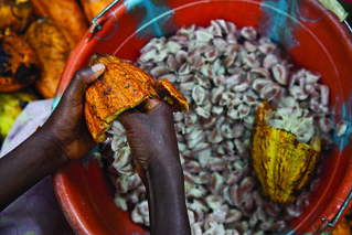 Cocoa extraction | by Bread for the World