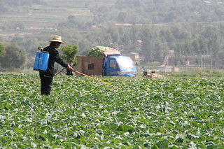 Spreading Pesticide | by IFPRI-IMAGES