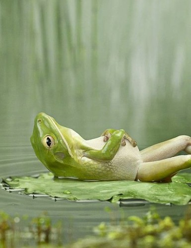 frog relaxing after lunch - ~4500 views! | by gabriel.georgina