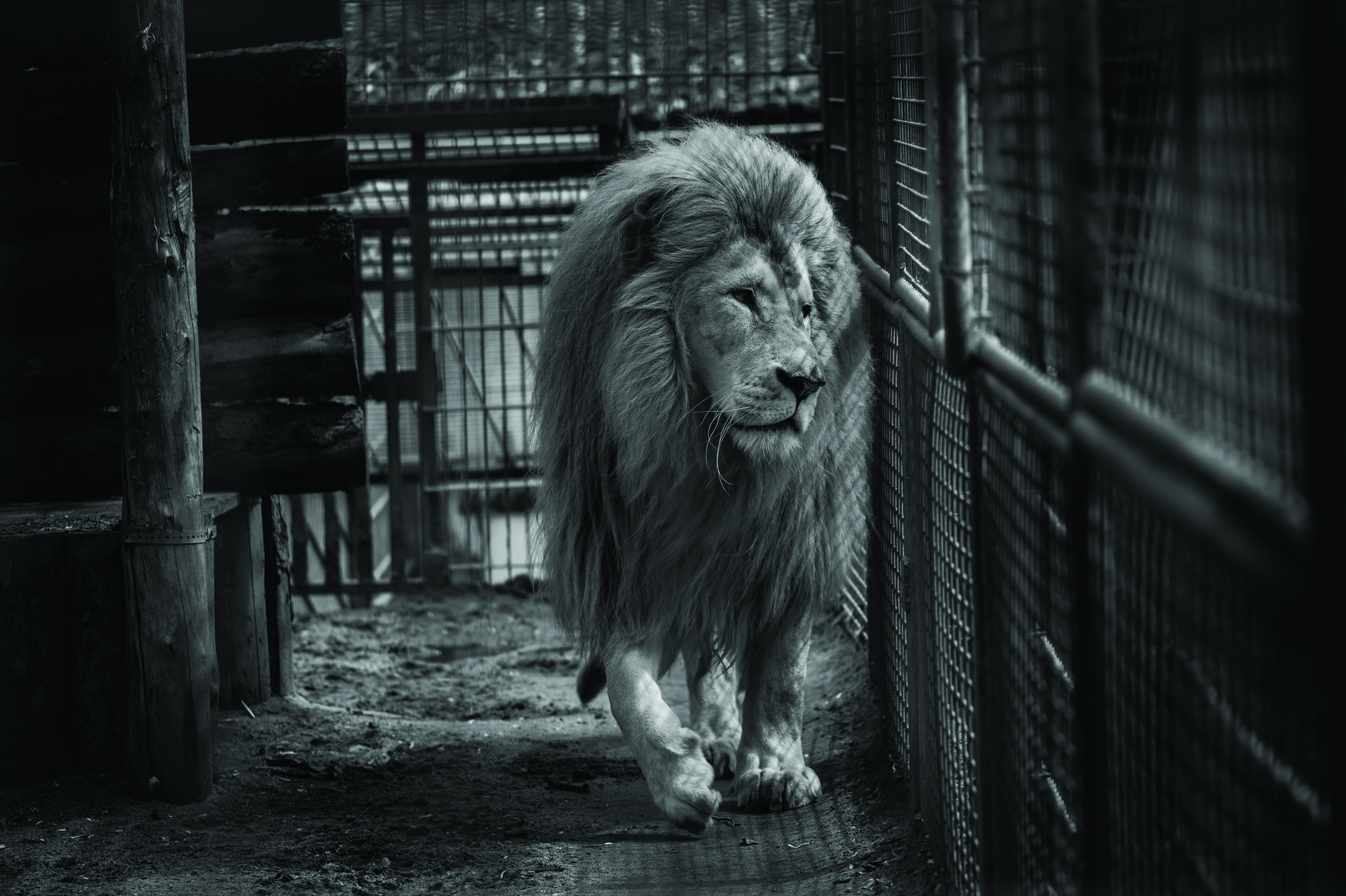 Animals in European Zoos: A Photo Exhibition (c) Jo-Anne McArthur