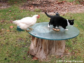 Looking for Kit Kat's Food Dish 5 | by Farmgirl Susan