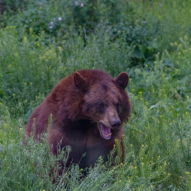 Black Bear YBW