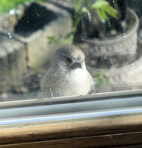 1bird at window clint collier | by Contra Costa Times