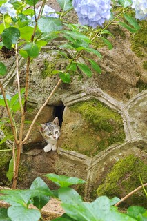 Cave kitten.... | by pippy & timmy