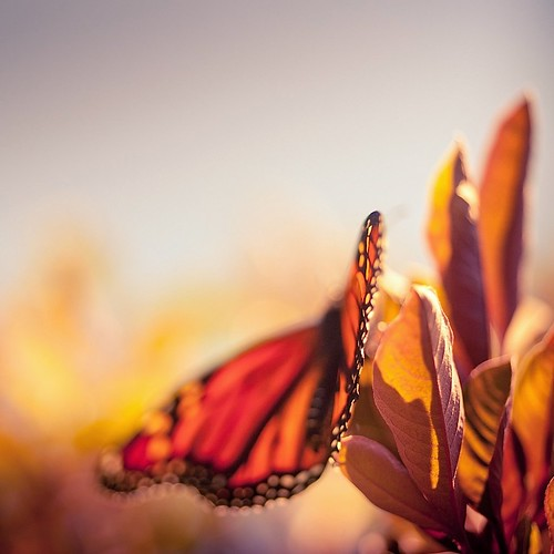 Butterfly | by ►CubaGallery