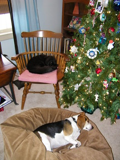 198/365/928 (December 26, 2010) - Peaceable Kingdom at Christmas | by cseeman