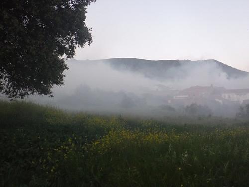 La niebla de romero.-Artística