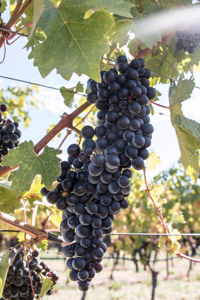 Grapes Covert Farms