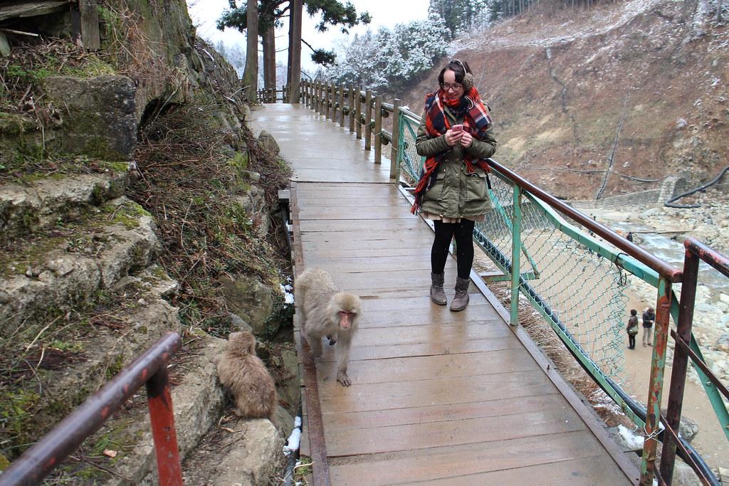 Jigokudani Snow Monkey Park Trip