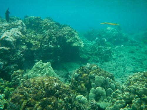 Snorkeling Kealakekua Bay