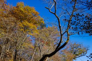 高木を見上げる