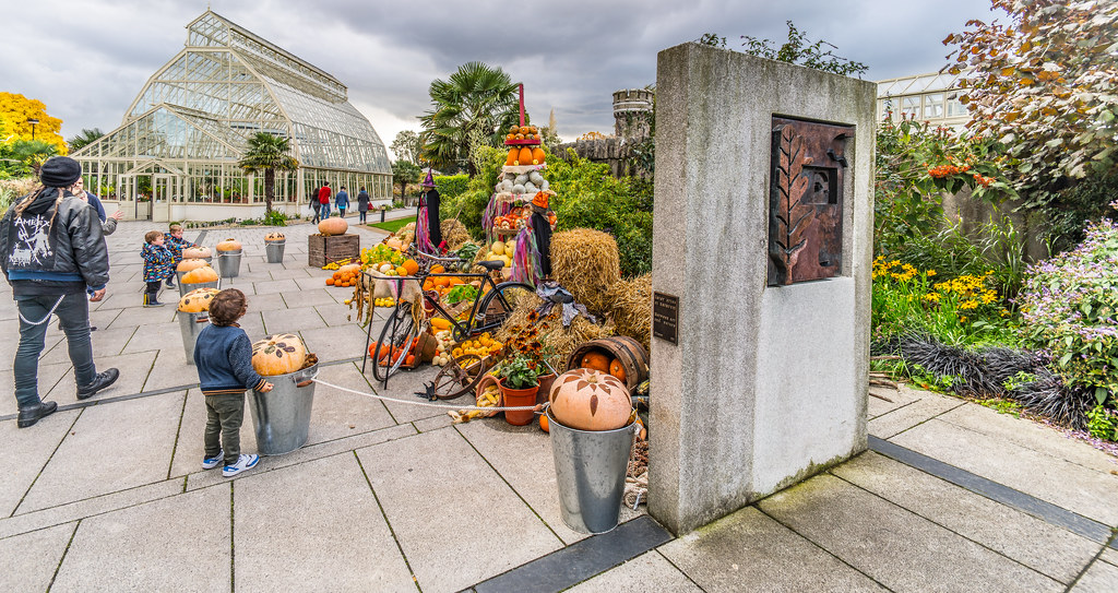 ONLY A FEW WEEKS TO HALLOWEEN [PHOTOGRAPHED IN THE BOTANIC GARDENS IN DUBLIN-121844