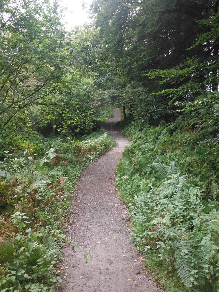 Strid Wood 4