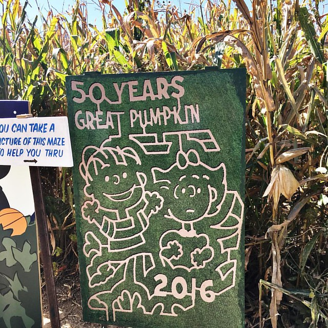 How cool is this corn maze?