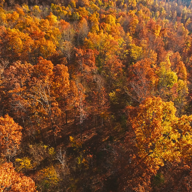 Drone Photo of Fall Leaves in Arkansas