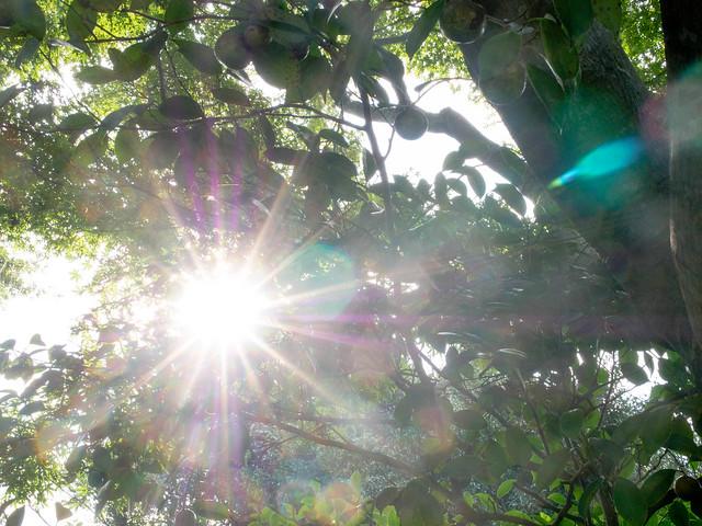 のこのしまアイランドパーク Nokonoshima Island Park