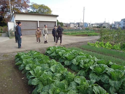 20161118_蕨市 農地パトロール
