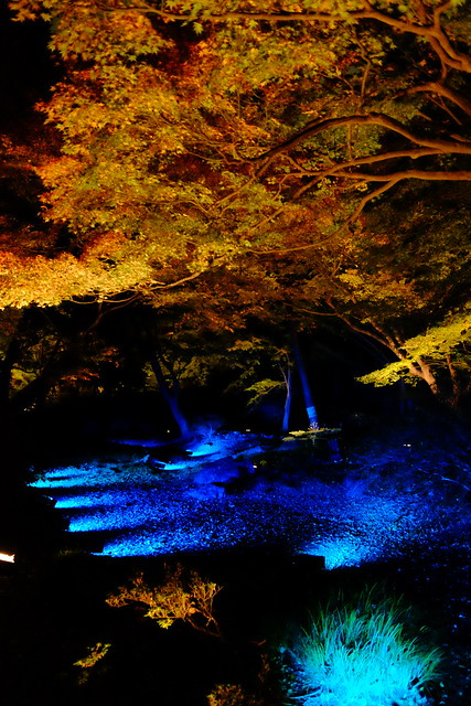 RIKUGIEN Colored Leaves light up 2016 08