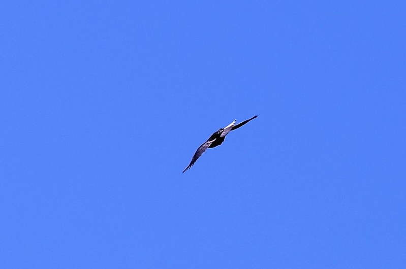 Crows 29.09 (12)