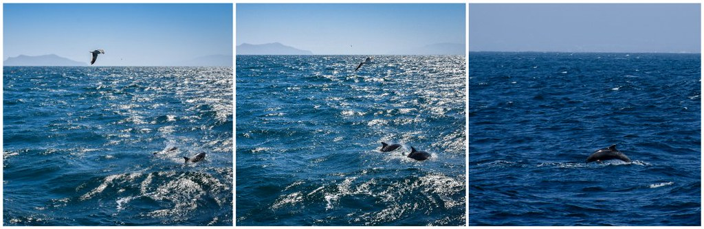 first glimpse of dolphins