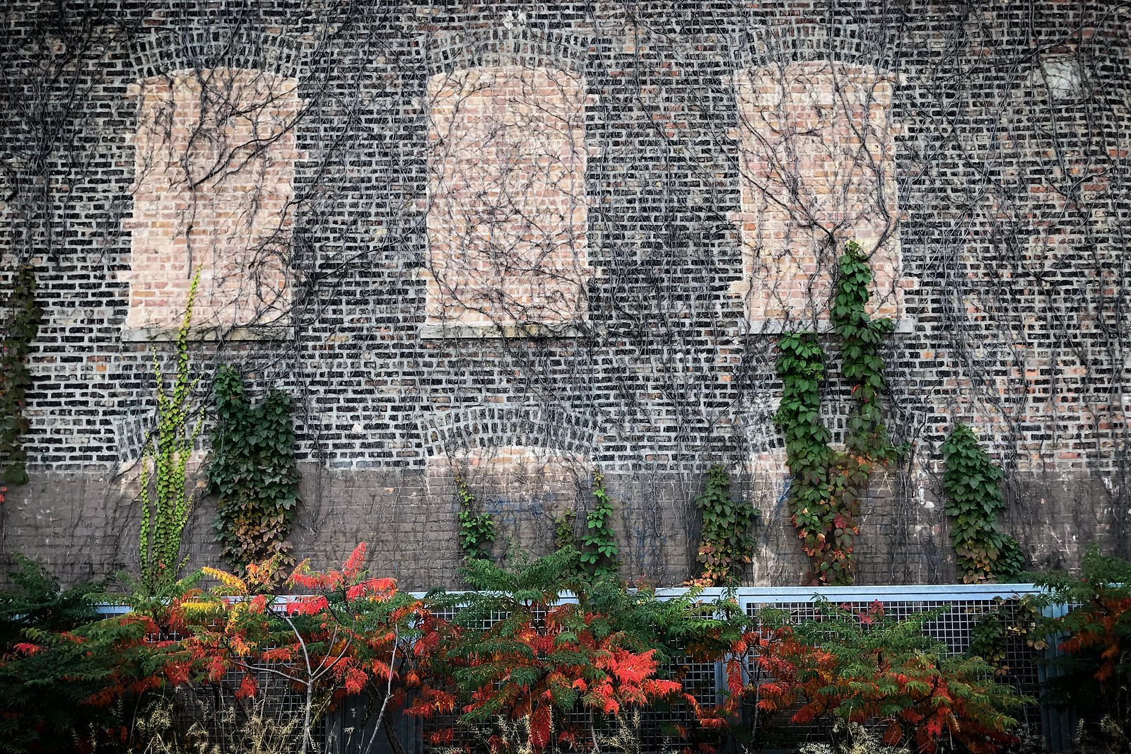 (294/366) Wall and Flora on the 606