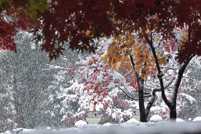 Autumn leaves and snow at Heirinji, Saitama 2016