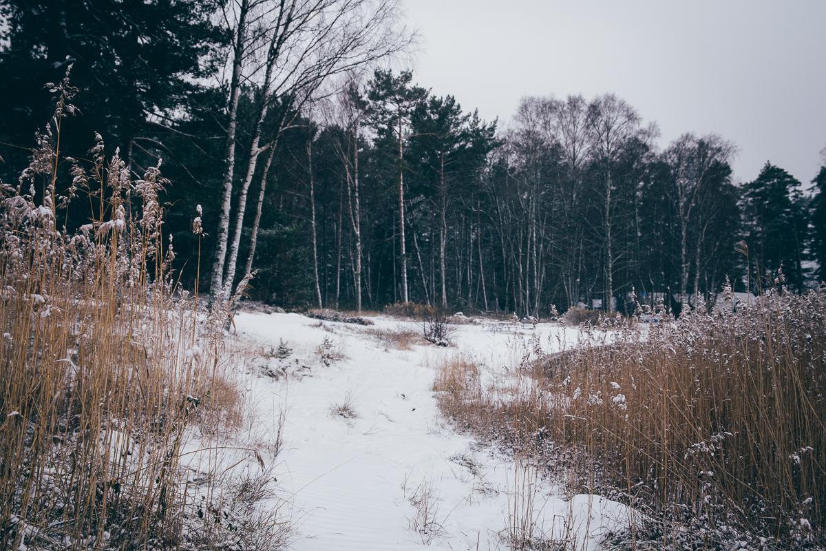 Winter | Cashew Kitchen