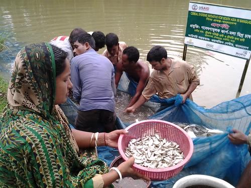 Pond aquaculture in Rangpur, Bangladesh. Photo by Md. Ershadul Islam, 2012.