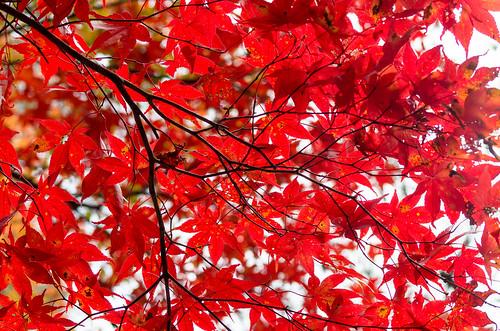 紅葉狩り - 東山公園 24