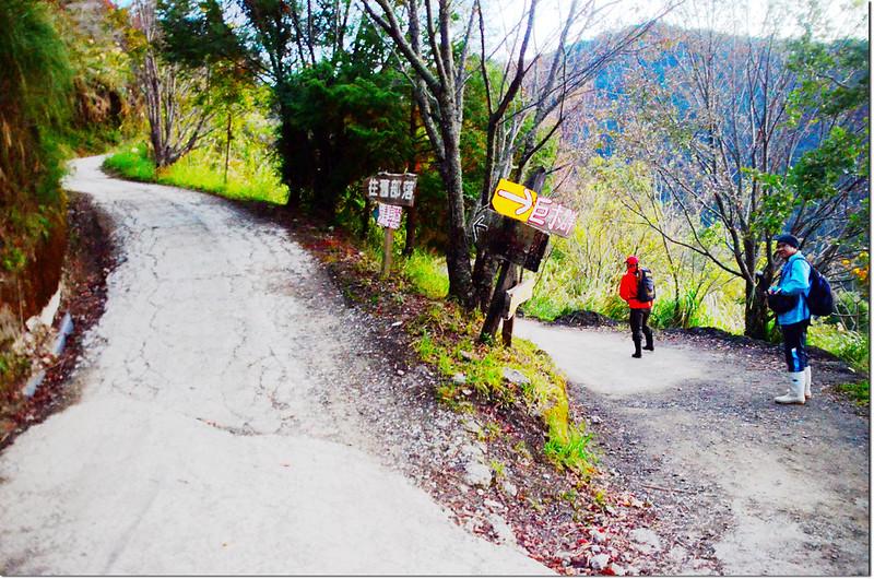 司馬庫斯舊部落、巨木群岔路