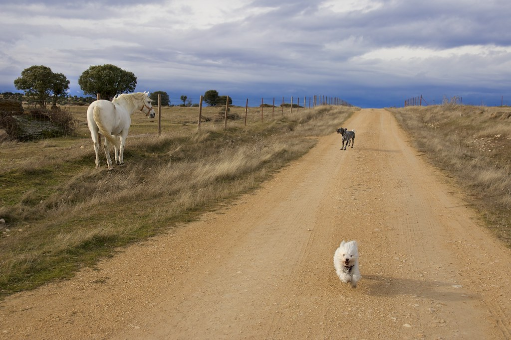 The horse, the dog... and Phoebe! | by Natalia Romay Photography