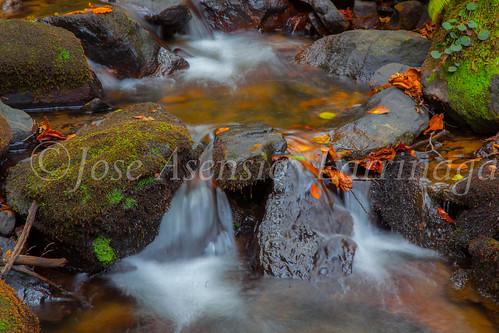 Parque Natural de #Gorbeia #DePaseoConLarri #Flickr      -1457