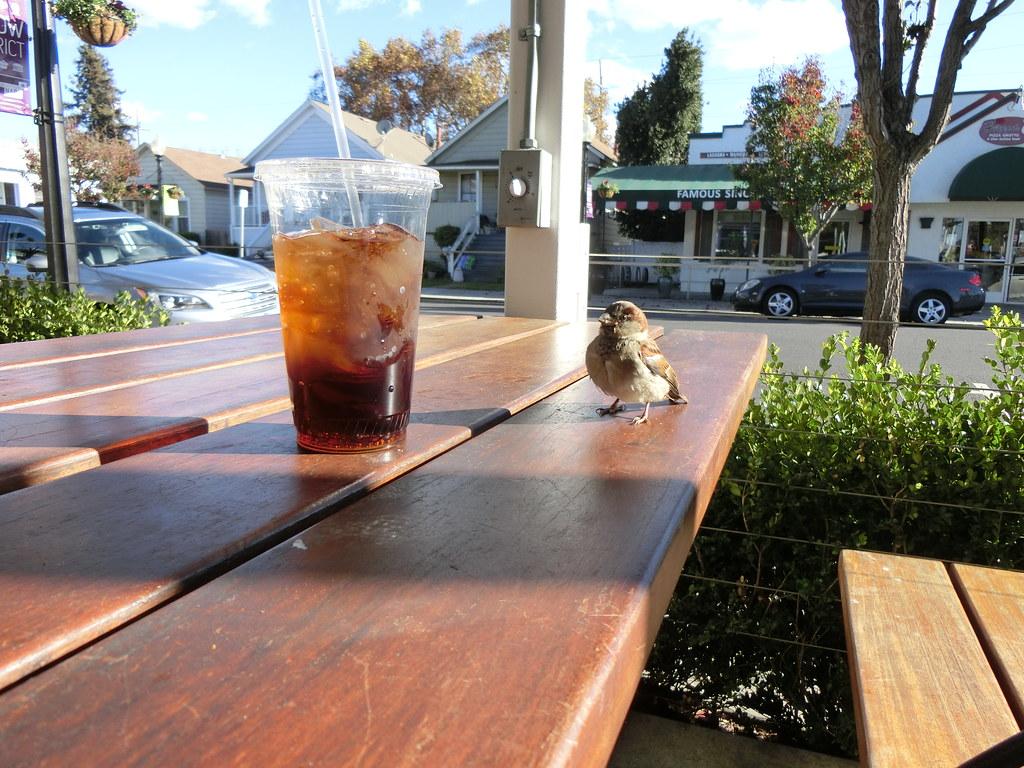 Gott's Roadside Birdie