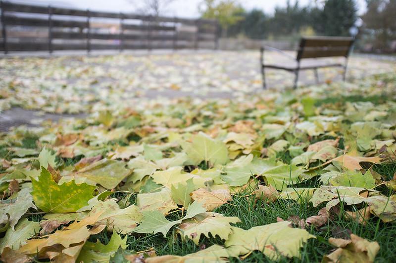 A ras de otoño