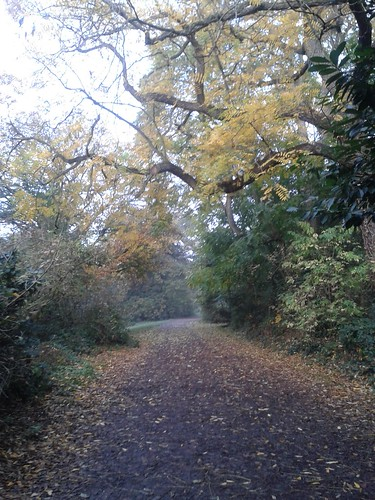 November 1 in Hampstead Heath, Morning Run
